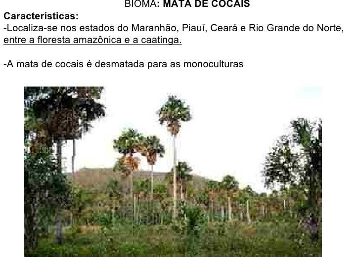 BIOMA: MATA DE COCAISCaracterísticas:-Localiza-se nos estados do Maranhão, Piauí, Ceará e Rio Grande do Norte,entre a flor...