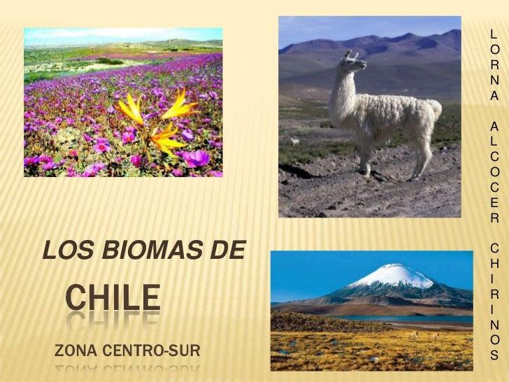 Chile Zona CENTRO-sur<br />  LOS BIOMAS DE <br />LORNA ALCOCER CHIRINOS<br />