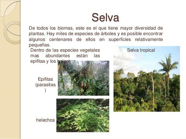 Biomas del mundo for Cuantos tipos de arboles hay en el mundo