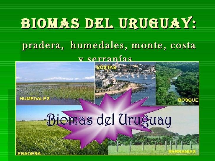 Biomas del Uruguay:   pradera,   humedales, monte, costa y serranías.