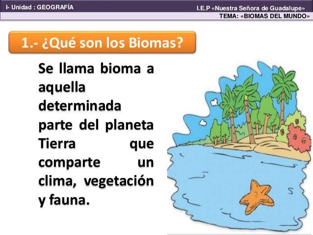 Q Son Los Orangutanes Biomas en el mundo