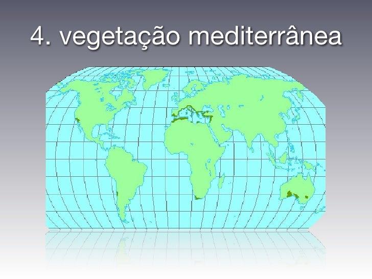 4. vegetação mediterrânea
