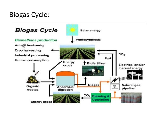 Biomass Energy Images - Reverse Search