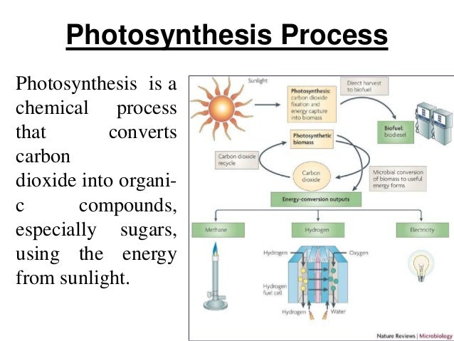 Biomass energy 6 photosynthesis process 7 photosynthesis ccuart Image collections
