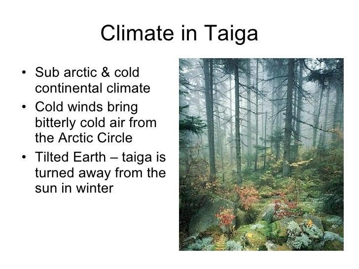 Taiga Climate - Bing i...