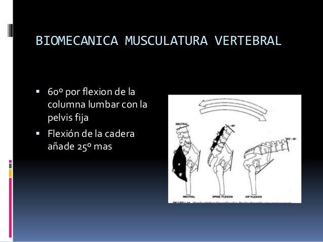 PDF) Biomec nica de la columna