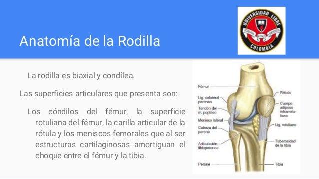 Biomecánica de Rodilla y Pierna