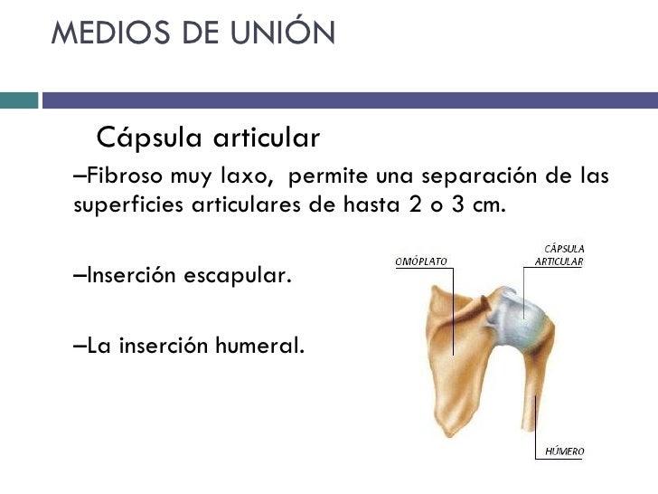 Biomecanica hombro, pruebas funcionales y ortopedicas