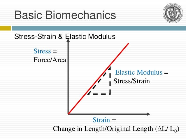 biomechanics of bones, Skeleton