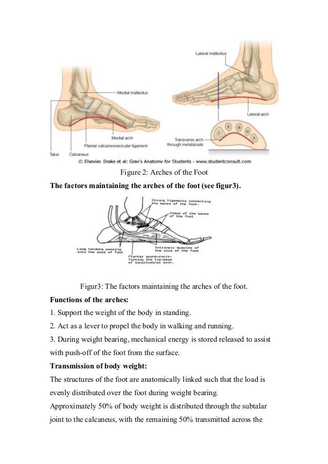 Biomechanics of ankle and foot