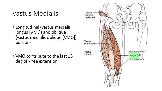 Biomechanics of hip and knee joint