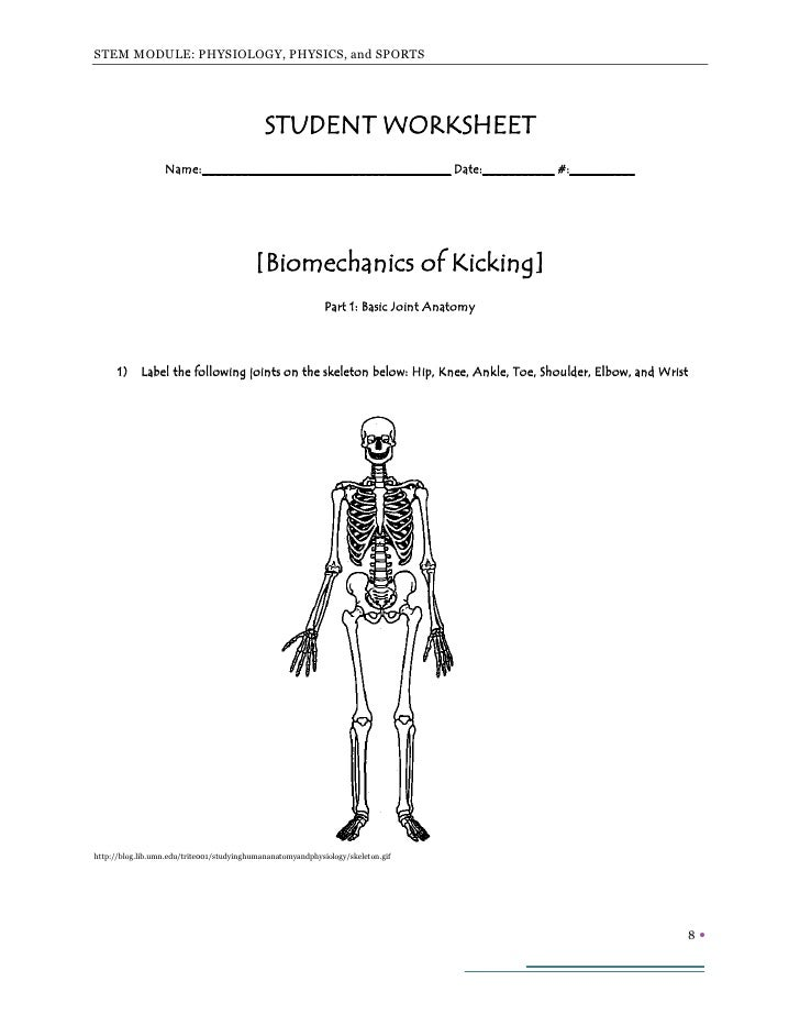 A STEM Module for Bioengineering Topics Muscle and Movement Part I – Joints and Movement Worksheet