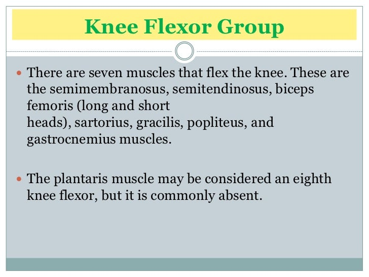 Biomechanics Of Knee Complex 7 Muscles