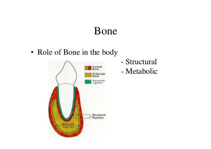 Bone• Role of Bone in the body                             - Structural                             - Metabolic