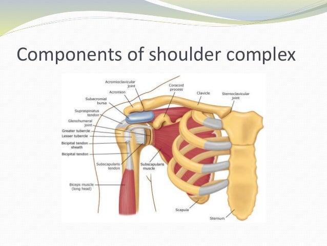 Shoulder Complex Ukrandiffusion