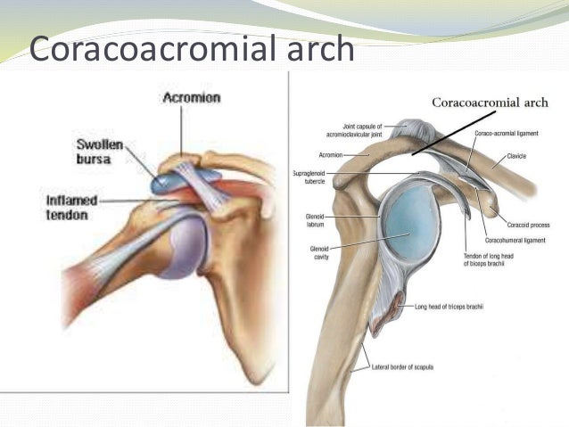 biomechanics of the shoulder The final rotator cuff muscle in this series on shoulder biomechanics is the supraspinatus this muscle originates in a trough-like area above the scapular spine, hence its name supra, which.