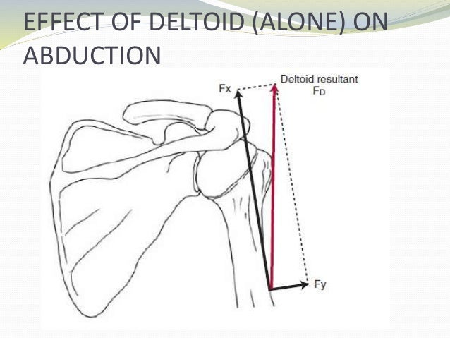 Biomechanics Of Shoulder Complex