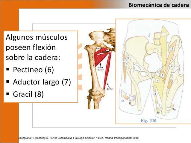 Biomecánica de cadera