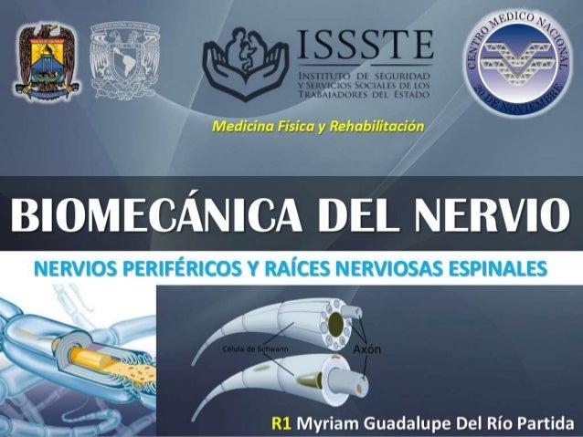 Medicina Física y Rehabilitación R1 Myriam Guadalupe Del Río Partida BIOMECÁNICA DEL NERVIONERVIOS PERIFÉRICOS Y RAÍCES NE...