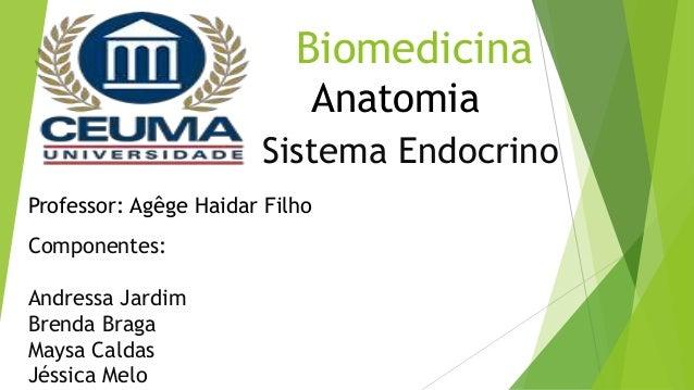 Biomedicina Sistema Endocrino Componentes: Andressa Jardim Brenda Braga Maysa Caldas Jéssica Melo Anatomia Professor: Agêg...