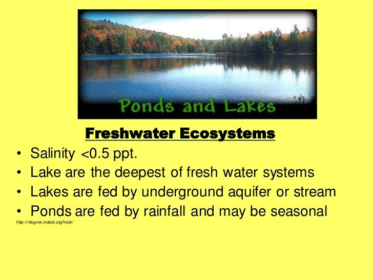 freshwater ecosystems essay Fresh water ecosystems essay  benefits of extracting or using one type of nonrenewable and one type of renewable energy resource from freshwater ecosystem.