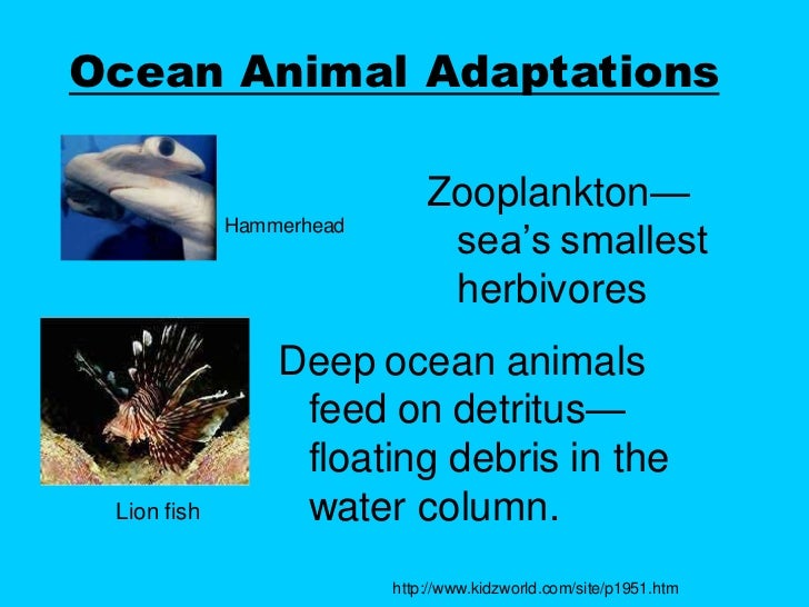 deep sea creatures adaptations Deep sea adaptations most large animals of the deep-sea benthos are unique to lesson iii: animal adaptations and distributions ii.