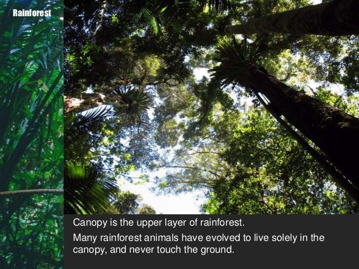 11. Rainforest Canopy ... & Biomes