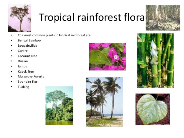 biology oxygen and tropical rain forest Ib biology/option g - ecology and conservation aesthetic reasons are that the tropical rain forest is one of the the oxygen makes it an unfavourable.