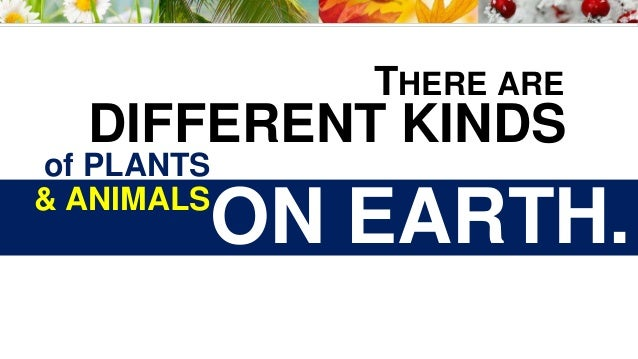 THERE ARE DIFFERENT KINDS of PLANTS & ANIMALS ON EARTH.