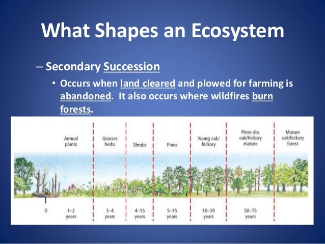 ecosystem succession paper Term paper on ecosystem term paper contents: term paper on ecosystem: top 7 papers | biology article shared by term paper on the ecological succession term paper on the ecological interdependence term paper on the ecosystem services.