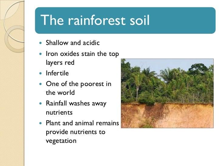 Tropical Rainforest Soil Type - Best Soil 2017