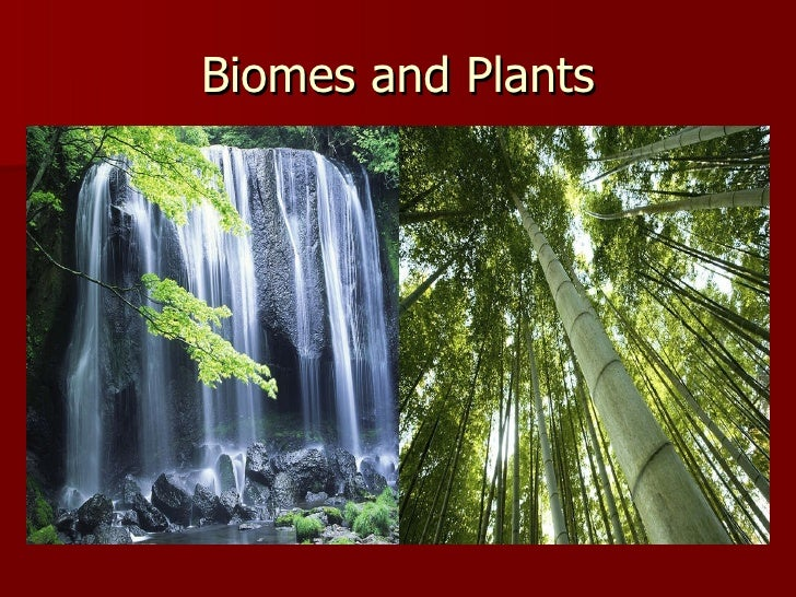 Biomes and Plants