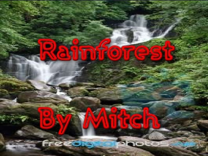 In a rainforest you can clearly tellthat it rains a lot because of thename. Each year at least 1500 to2500 ml of water wil...