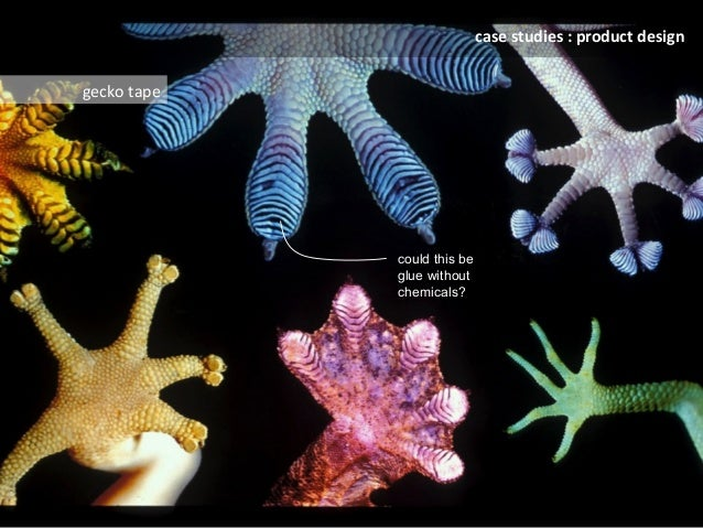 Biomimicry - The Future of Sustainable Innovation