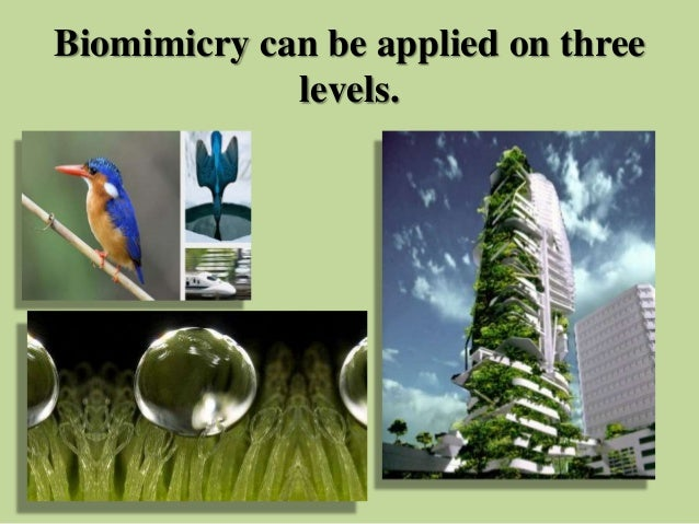 biomimicry applications  civil engineering