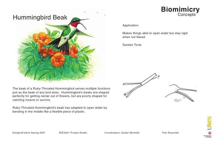 Biomimicry Concepts