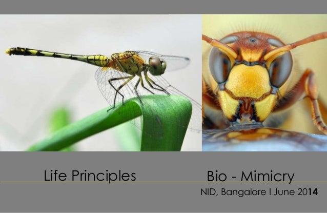 Life Principles NID, Bangalore I June 2014 Bio - Mimicry
