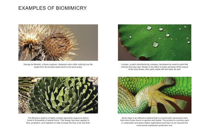 Biomimicry Senior Design Ideas