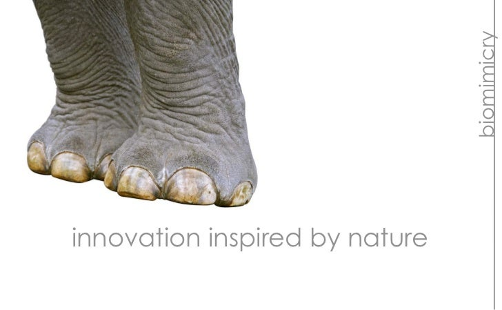 biomimicryinnovation inspired by nature