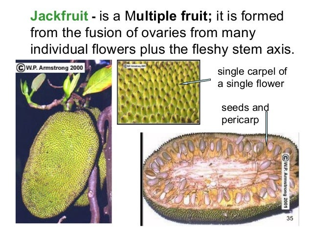 bryozoan structure diagram jackfruit seeds structure diagram biology m4 flowers to fruits and seeds