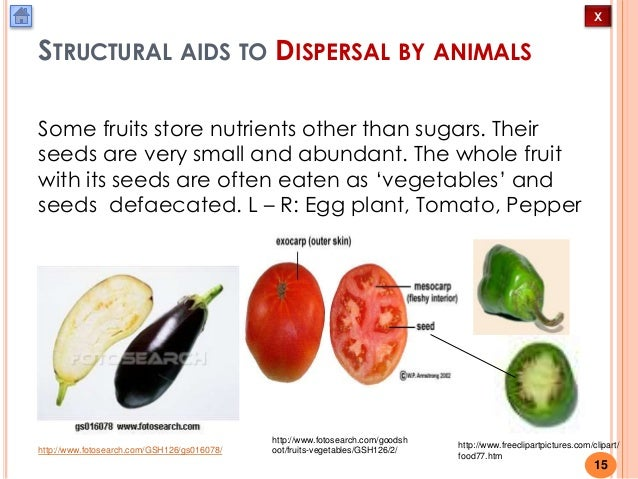 advantages of fruit and seed dispersal