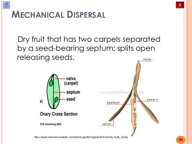 biology m4 fruit and seed dispersal 31 638?cb=1432053031 biology m4 fruit and seed dispersal