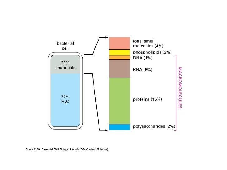 Biomoléculas Slide 3