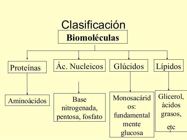 Biomoléculas organicas  Slide 3