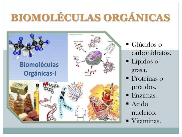 BIOMOLÉCULAS ORGÁNICAS  Glúcidos o carbohidratos.  Lípidos o grasa.  Proteínas o prótidos.  Enzimas.  Acido nucleico....