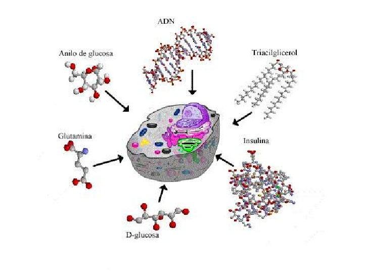 Biomoleculas y membrana