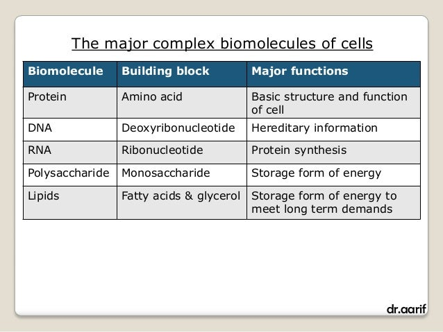 What Are the Four Main Biomolecules and Their Functions?