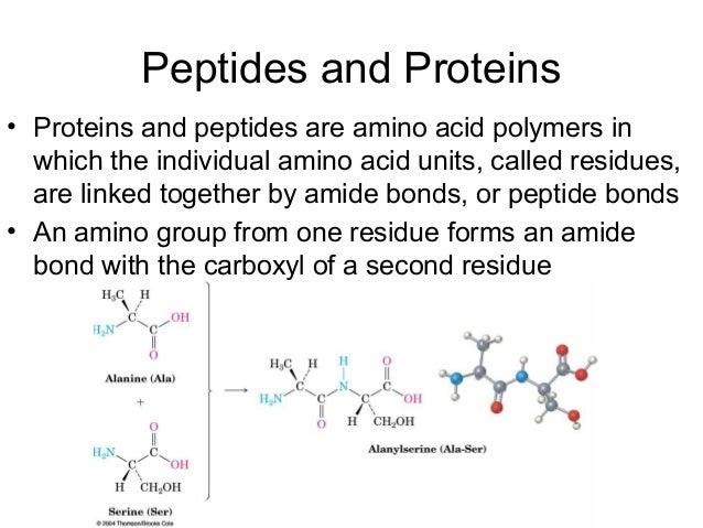 Bio molecules Proteins Amino Acids And Peptides