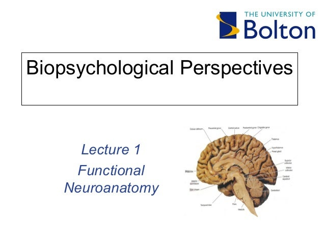 Biopsychological Perspectives Lecture 1 Functional Neuroanatomy