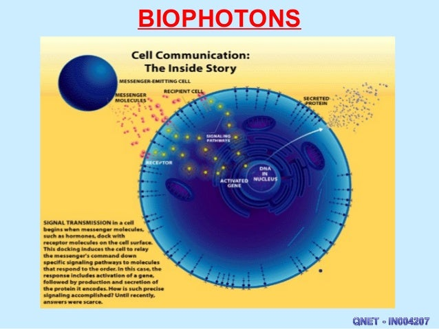 [Image: biodisc-biophotons-7-638.jpg?cb=1403094157]